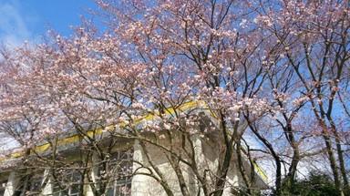 桜の木々.jpg